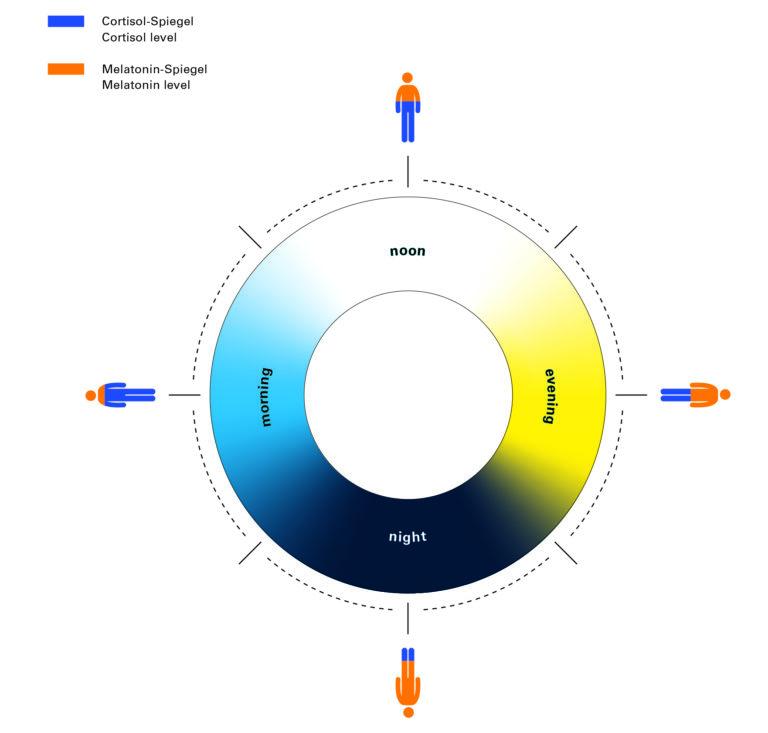 Grafik biodynamische Lichtwirkung